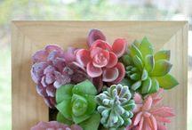 Succulents Gardening & Design