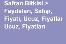 Safran Bitkisi > Faydalari, Satisi, Fiyati, Ucuz, Fiyatlari / Safran Bitkisi > Faydalari, Satisi, Fiyati, Ucuz, Fiyatlari