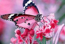 Favorit fjäril