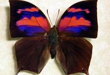 papillons et chenilles / by Béatrice Dumont