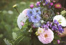 fleurs en août