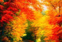 Fall - Podzim