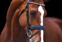 cavalli per sempre / la mia seconda vita