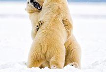 Ursos / Animais