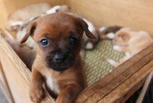 Köpek istiyorum!