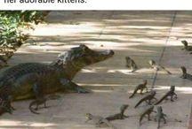 Alligator/crocodile
