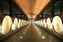 Ernie Els - Cellar Lighting