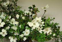 декоротивные цветы