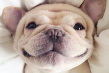 Cute Dogs / If you like cute dogs, please follow this board. We guarantee that we will make you amazed :)