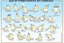 Calopsita