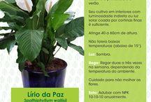 Horta e Jardinagem / informações de como fazer e manter pequenas hortas e jardins