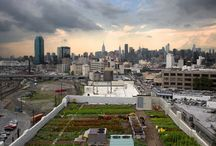 Rooftop Farming / Rooftop Farming