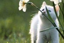 Katt  - Påske