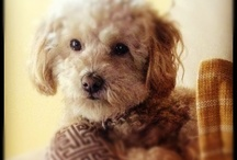 Dog gone cute! / by Trudy Allen