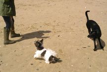Dog Friendly Cornwall / Get those tails wagging #dogfriendly