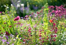 Cottage gardens / A lovely collection of welcoming gardens:)