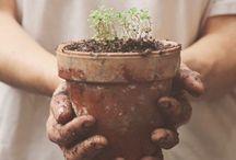 Potting in terracotta