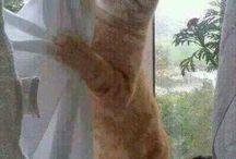 Kitty korner