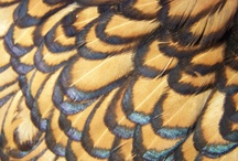 Favourite Feathers
