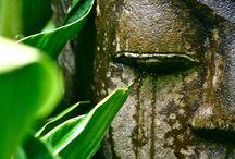 Bouddha et ZEN