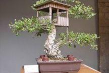 bonsai,miniature garden