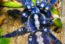 Aranhas e Escorpiões