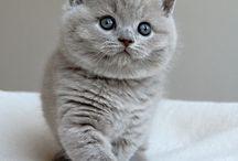 Miaow...