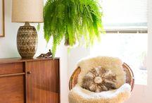 Grönt och odling inomhus