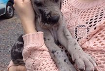 Our little Great Dane ❤️