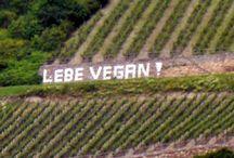 derWeinblog.de / (Wein)Verkostungen.Meinung.Keine Punkte!