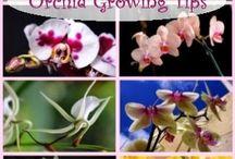 Orchid / by Carol Garcia