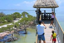 Attractions / Attractions in Holbox Discover Holbox Island, Isla Pajaros, Cenote Yalahau and all wildlife