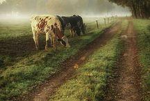 Картины ферма