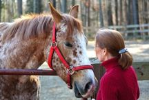 Horse therapy / by Simone Holloway Elison