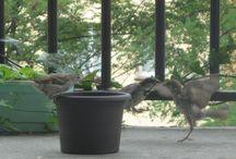 Ptaki - Birds / Małe pierzaste latające