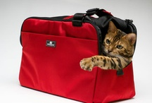 Well Traveled Pet / If we could just take our pets with us everywhere.