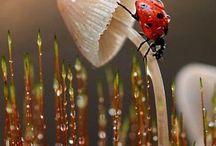 zvířata, hmyz
