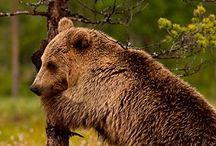 Divoké zvieratá a potomokovia / Wild animals and offspring