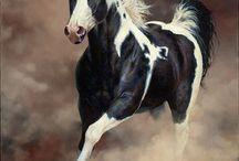 Beautiful Horses / by Barbara Howald Carlan