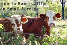 Small Farm Homesteading