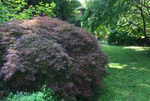Jardin de la Belle Allemande, Lyon / Jardin privé de mi-ombre, au cœur de Lyon, la roseraie est belle en mai !