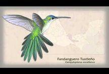 Colibríes- Hummingbirds / by Alejandra Georgina Laorrabaquio Saad