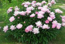 Уход-цветы