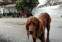 EVCİL HAYVANLAR(PETS) / Beymelek Taşevlerde evcil hayvanlarımız