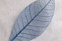 How to skeletonize leaves