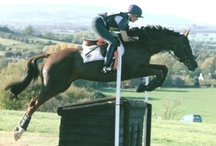 River Valley Robert (Robbie) / 16.1hh TB Gelding, Born 2002 Sire/Dam: TBA/TBA Owned by Miss Camilla Perrett Robbie has come to the yard to gain more competitive experience and make schooling progress whilst his owner is at University. He is a delightful and charming horse with a very sweet nature, he is very eager to please and enjoys his jumping!