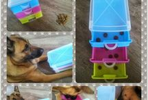 Dog Brain training
