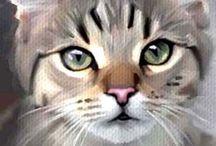 A katt