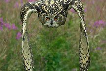 Owls / by Dawn Mellor