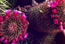 Fiori / Flower